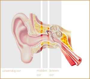 Afbeelding-annatomie-oor